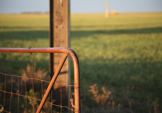 A gate with a green field behind it
