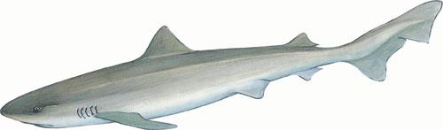 School sharks
