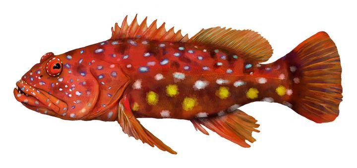 Harelquin Fish
