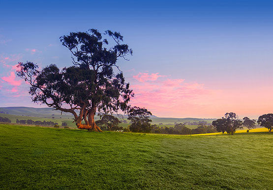 Clare Valley South Australia