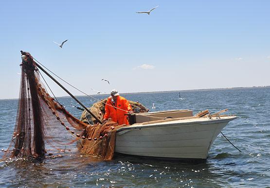Fisherman setting nets