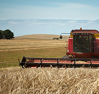 Wheat farming photo