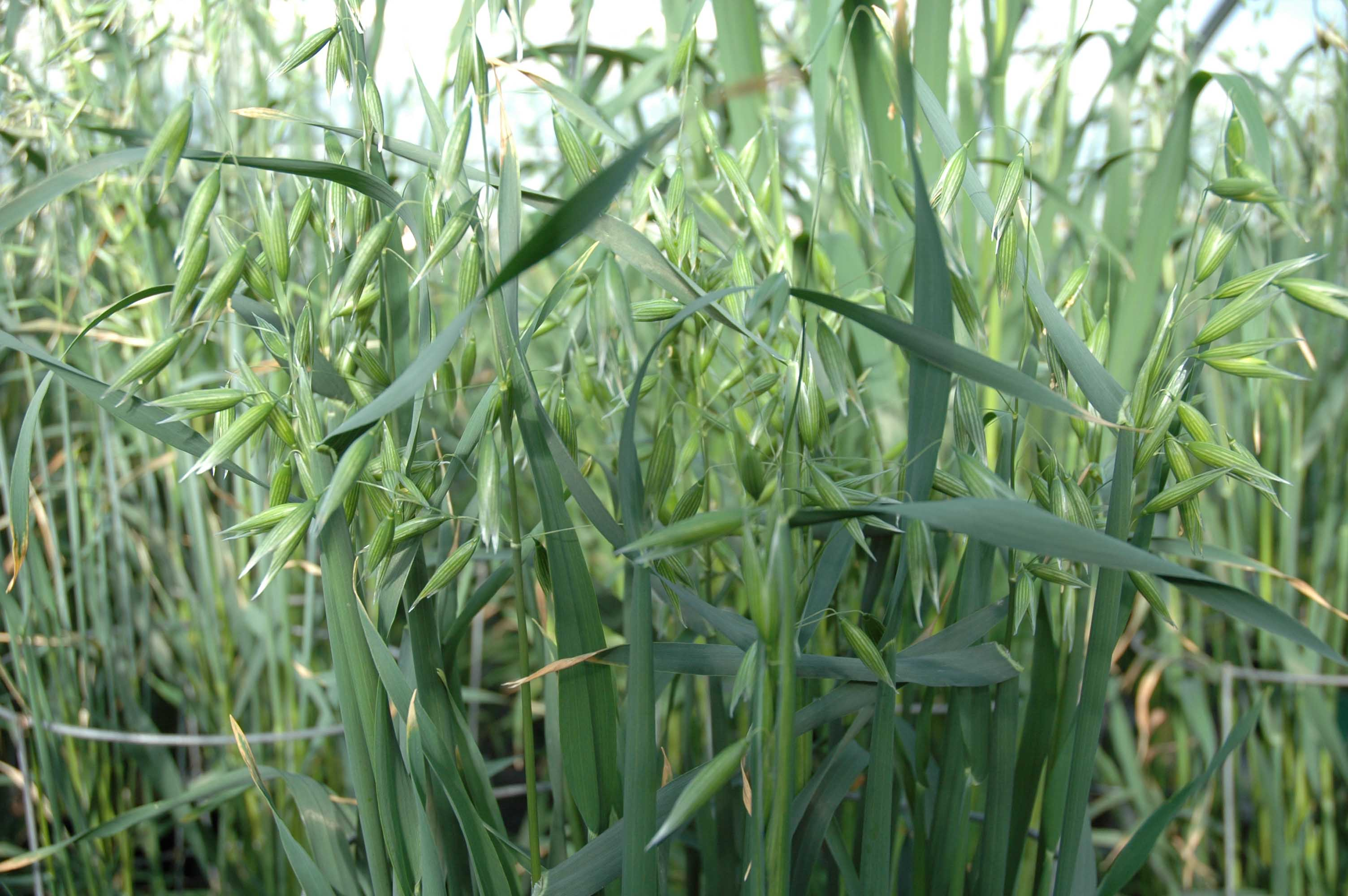 close up of green crop