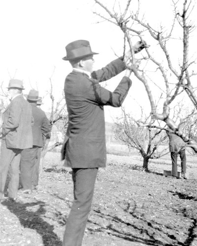 Mr George Quinn conducting a pruning demonstration for orchardists in 1918